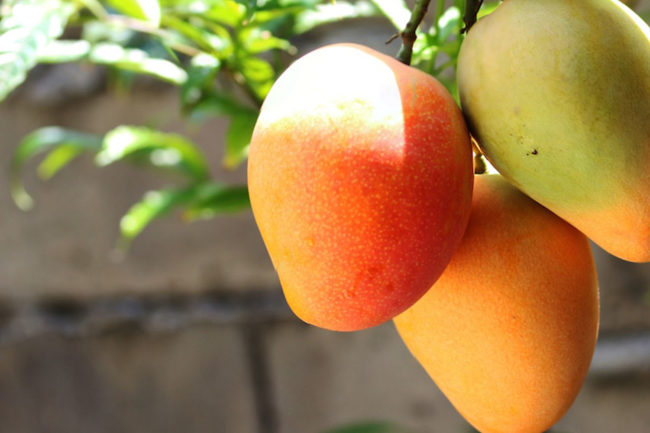 Customer complaints: make the most of low-hanging fruit